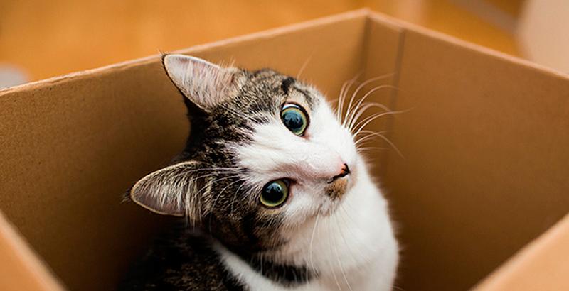 Un abanico de curiosidades con los gatos