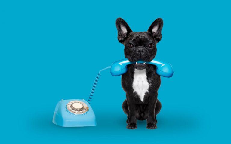 Si tienes mascotas no te pierdas estos gadgets