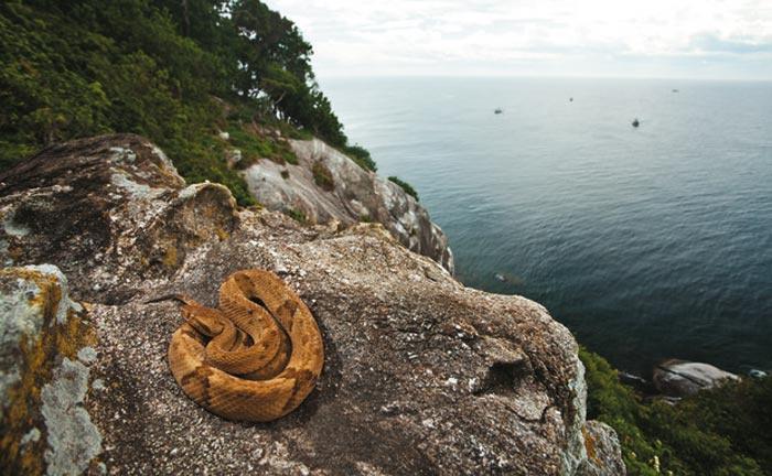 Igual de peligrosa que la isla de los dragones es la isla de las cobras