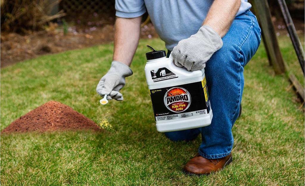 Cómo evitar productos tóxicos para deshacerte de las hormigas