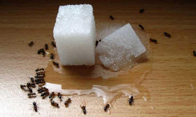Trucos y remedios caseros para eliminar las hormigas