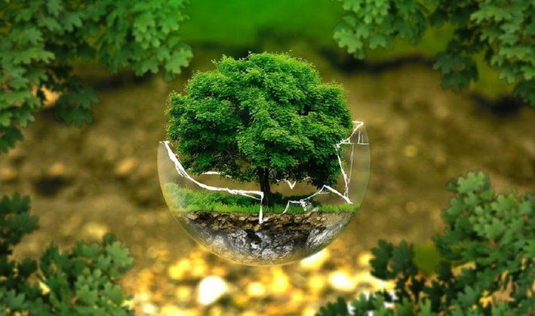 Del cuerpo al planeta: beneficios de consumir productos ecológicos