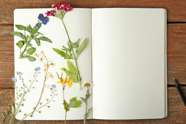 Flor seca y flor preservada