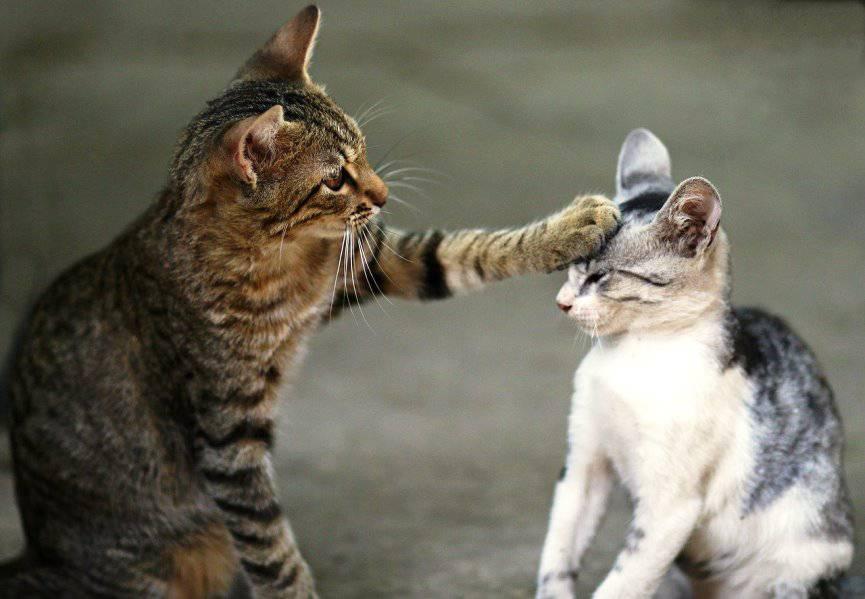 Paso a paso para presentar a los gatos