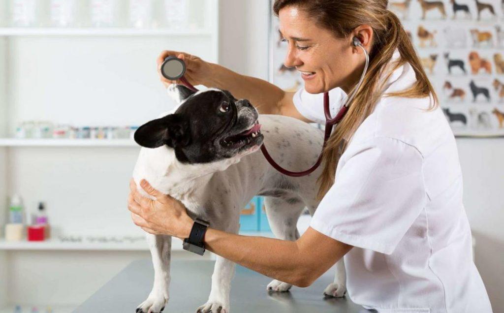 Síntomas que tu perro puede presentar al tener fiebre