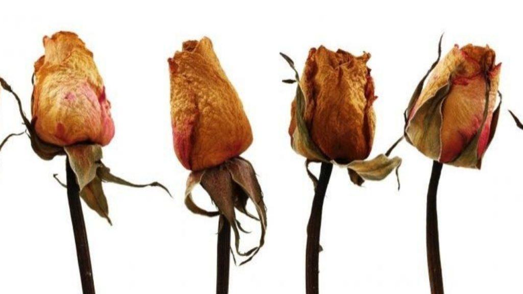 Manipula la flor  con cuidado