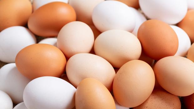 ¿Cómo se forma un huevo?