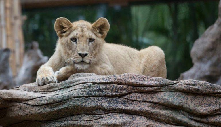 Estos son los mejores zoológicos de España