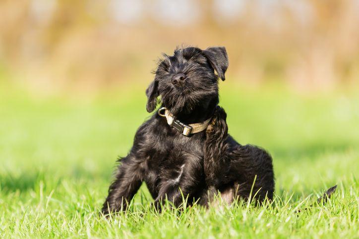 Consejos veterinarios para prevenir y tratar las alergias ambientales en las mascotas