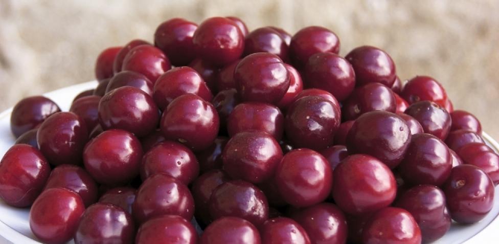 ¿Qué son las cerezas?