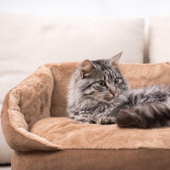 Este es el motivo por el que tu gato te usa de colchón