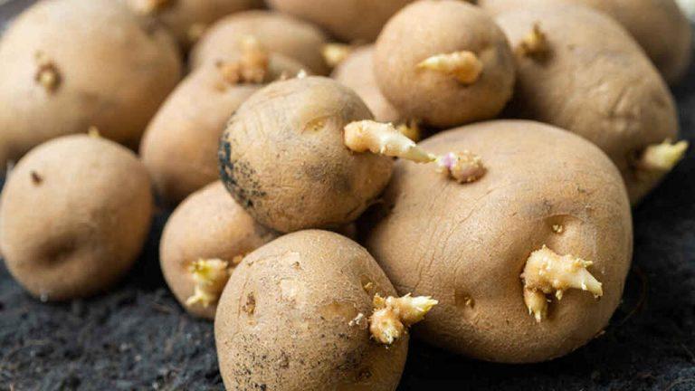 Trucos para que las patatas te duren más tiempo