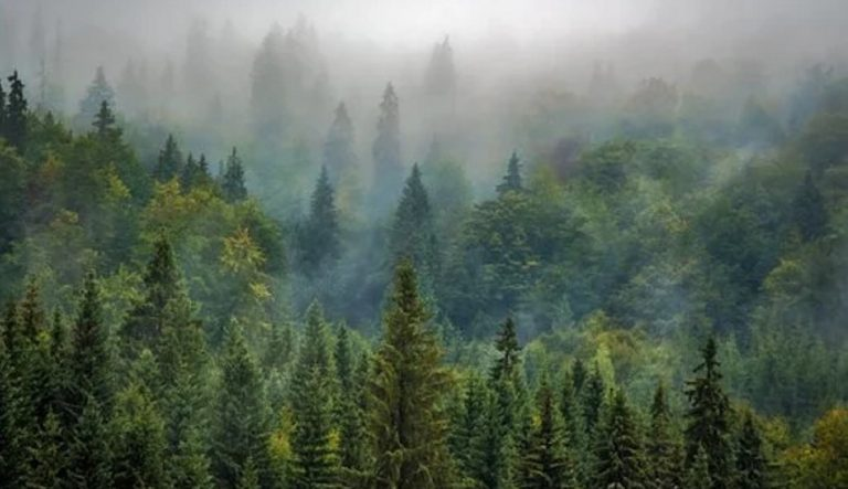 Técnica Forestal estará presente en Asturforesta 21