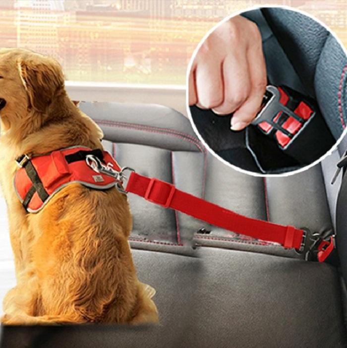 arnes mascota para coche