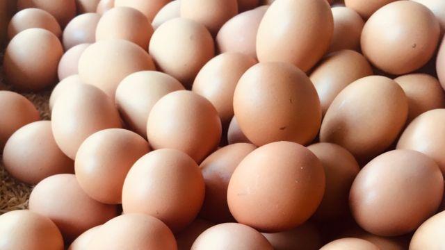 ¿Qué son los huevos?