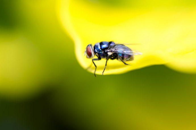 ¿Cómo acabar de una vez por todas con las moscas?