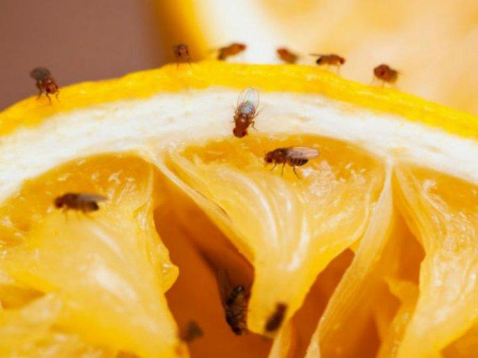 Más opciones para combatir la plaga