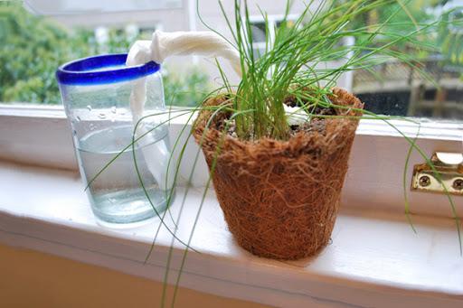¡A salvar plantas!
