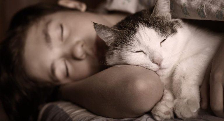 Cómo hacer que tu gato duerma de noche