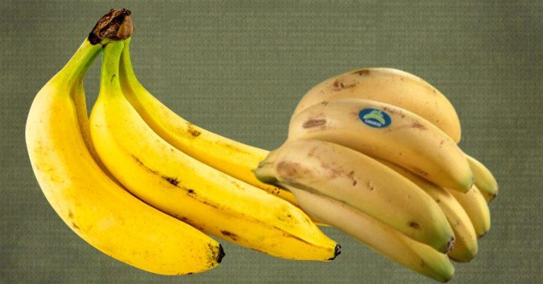 Helado de plátano: ¿es mejor con plátanos de Canarias o bananas?
