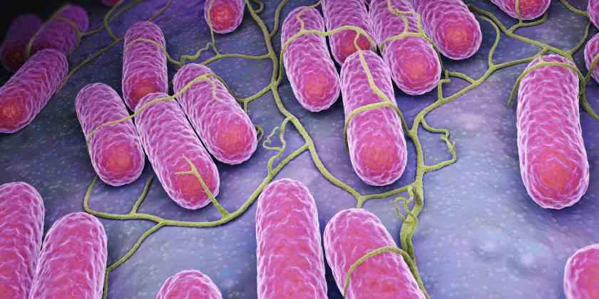 ¿Qué es la Salmonelosis?