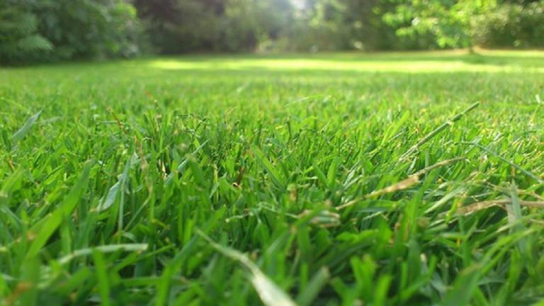 Desbrozadoras: qué tipos existen y cómo utilizarla en tu jardín