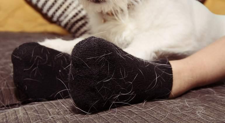Casa y ropa libre de pelo de gato