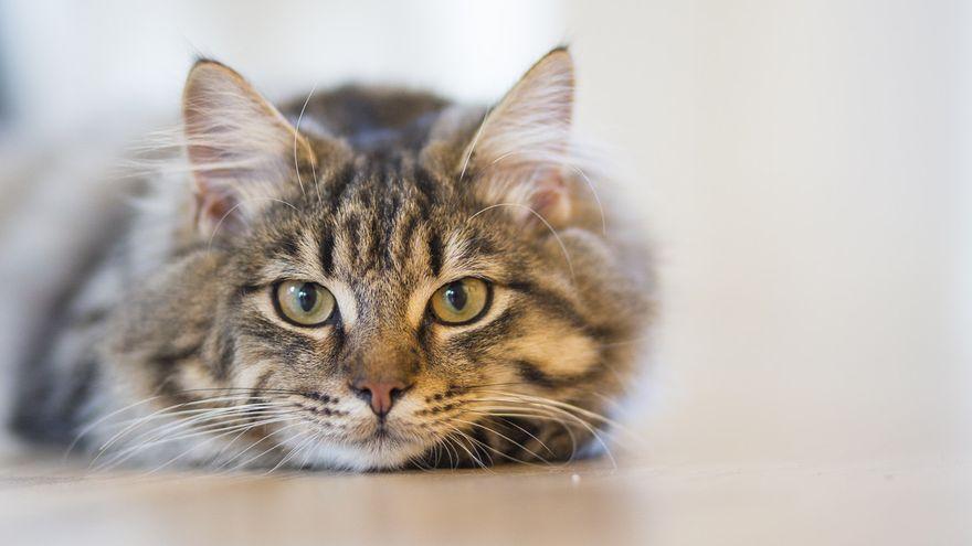 Top de consejos extras para evitar pelo de gato