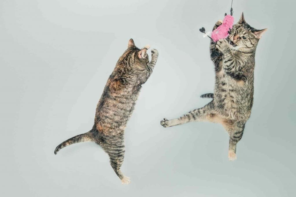¿Qué es el síndrome del gato paracaidista?