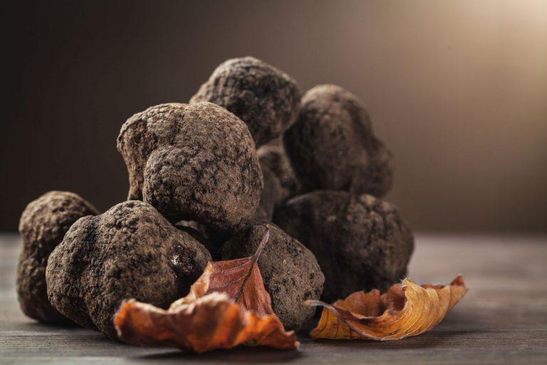 La trufa, el alimento de oro: así puedes cultivarla en tu casa