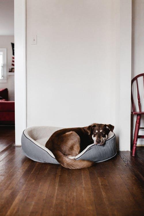 Hablemos de la cama del perro , elección y mantenimiento